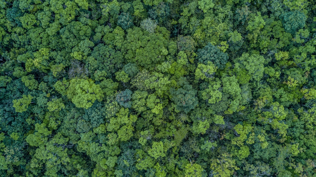 Image of aerial view forest, deforestation, forest conversion and palm oil plantations linked to disease outbreaks, finds new study in Frontiers in Veterinary Science