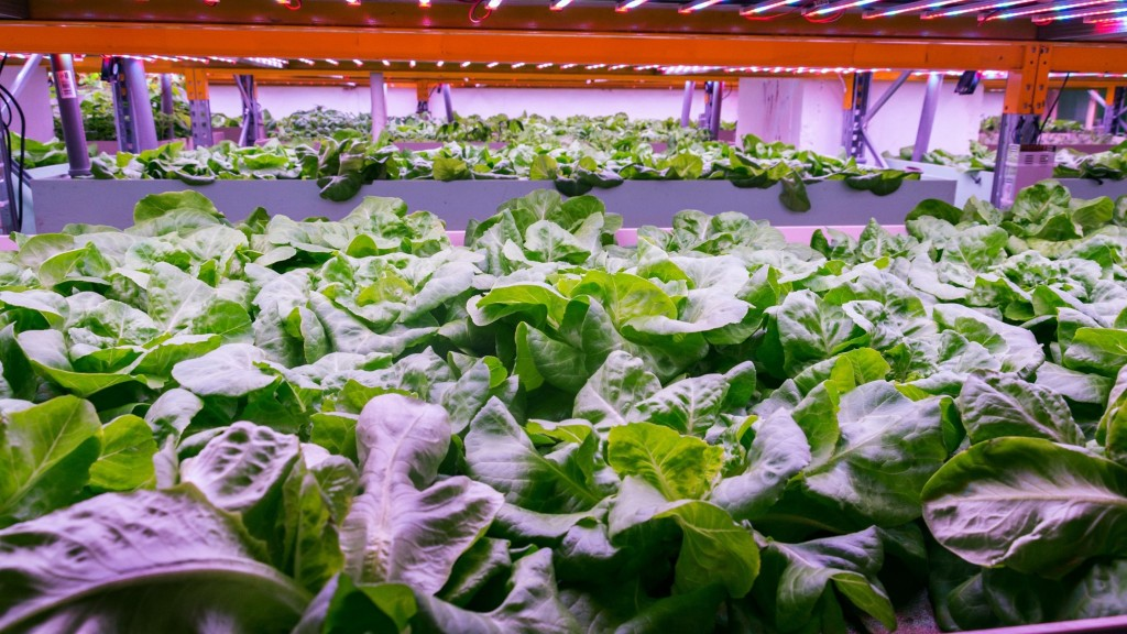 Aquaponics inspired by sewage plants grows tastier crops and keeps fish healthy finds study Frontiers in Plant Science